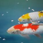 0055 Koi Fish (Carp): Cherry Blossoms / Shukou Okamoto 003