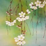0064 Spring Dawn / Keiji Sasaki 006