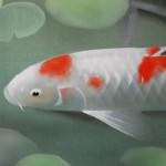 0079 Koi Fish (Carp): Water Lilies / Shukou Okamoto 004