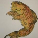0148 Koi Fish (Carp) Painting / Yasuo Tadami 005