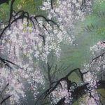 Kahou Sakakibara Cherry Blossom